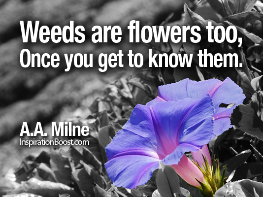 Flowers, Flower Quotes, Relationship Quotes, short life quotes, famous life quotes, a.a. milne, aa milne quotes