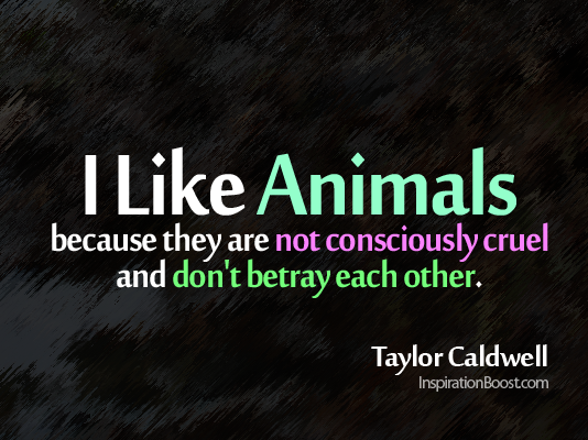 I like Animal, Taylor Cardwell, like a animal, like an animal, I like Animals, animal quotes, love animal, relationship quotes,