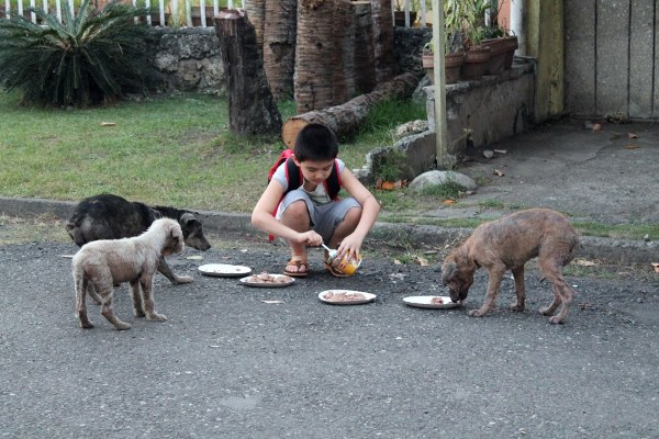 Ken feeding stray dogs - Happy Animals Club