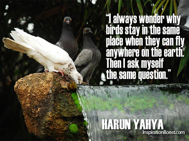 Bird Quotes Harun Yahya Inspiration Boost